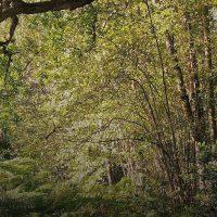 photo forêt Sologna réduite.jpg